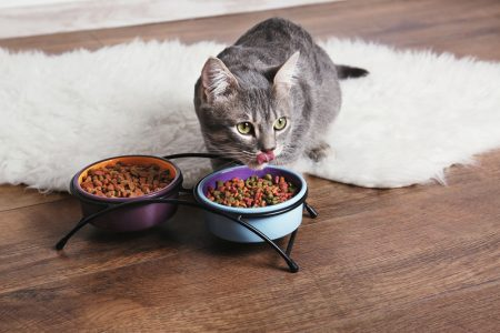 Croquette naturelle chat