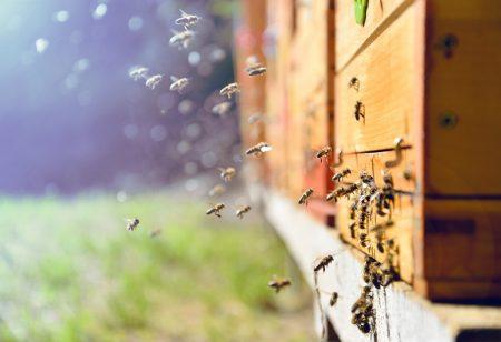 antivol pour ruches